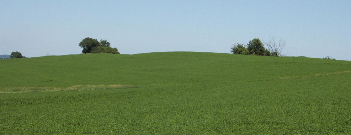 Field after Application of PRO CAL 40 and Biomass