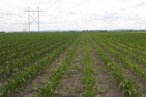 Blair, Nebraska Crop Results
