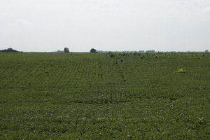 David City Nebraska Crop Responses