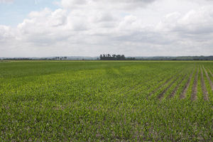 Herman Nebraska Crop Responses