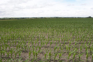 Herman, Nebraska Crop Responses