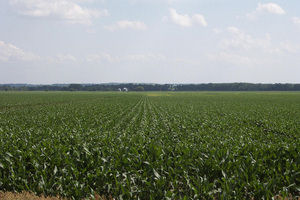 Nebraska City, Nebraska Crop Responses
