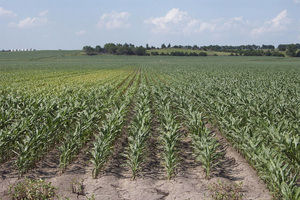 Nebraska City Nebraska Crop Responses