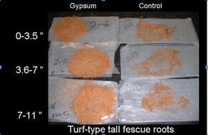 Penn State Gypsum Study