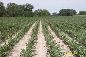 Syracuse, Nebraska Crop Result