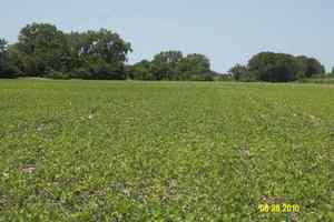 Syracuse Nebraska Crop Responses